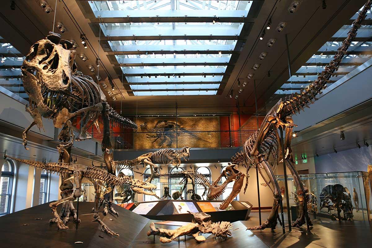Natural_History_Museum_Dino_HallNatural_History_Museum_Dino_Hall